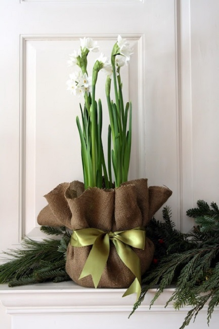 Holidays and paper whites christiansons nursery paperwhites 3 mightylinksfo